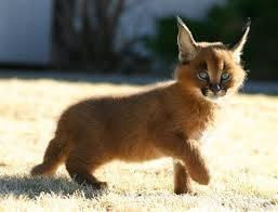 Pets Cats - Digital Internet Pages